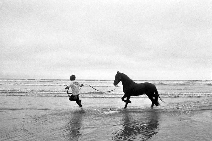 horseplay.jpg