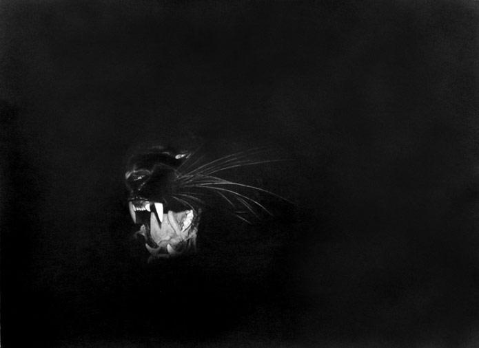 9_BlackPanther.jpg