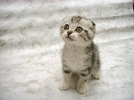 OMG, I did it! NEW CLAN! - Page 2 Cute_kitty