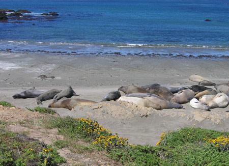 5 elephant-seals-2.jpg