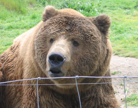 bear-funny-face.jpg