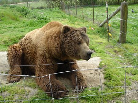 bear-lounge-2.jpg