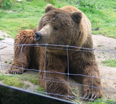 bear-lounge.jpg