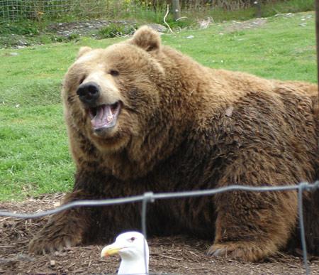 bear-smile.jpg