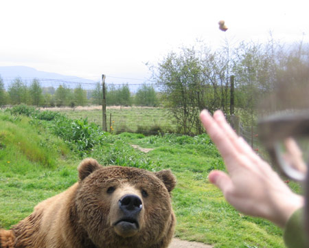 bear-throw.jpg
