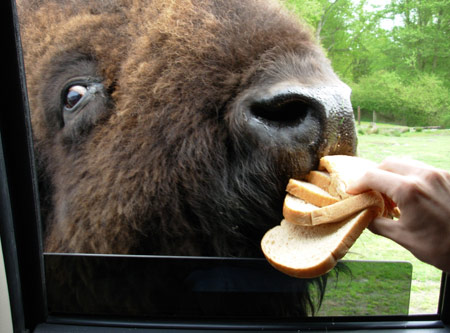 buffalo-bread-2.jpg