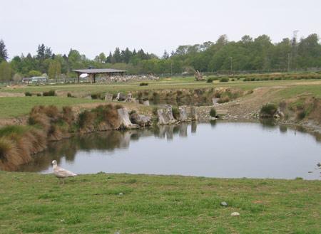 buffalo-pond.jpg