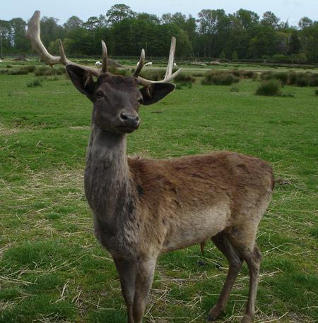 deer-3.jpg