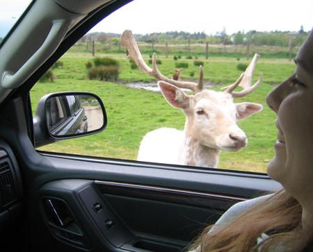 emily-deer.jpg