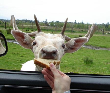 emily-feeds-deer.jpg