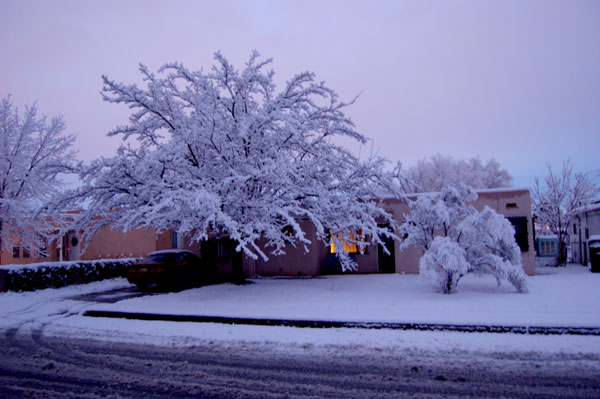 snowy1.jpg