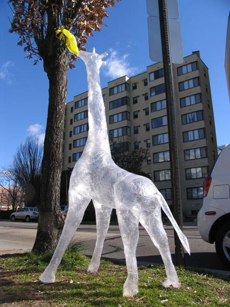tape-giraffe-yes.jpg