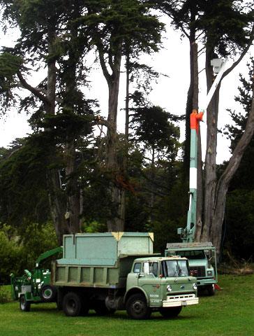 treechoppers.jpg