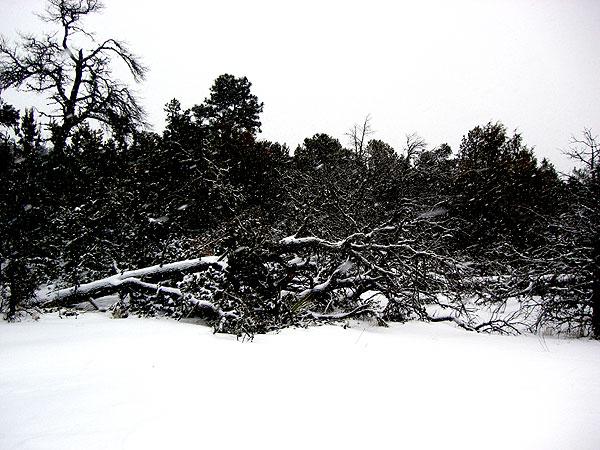 dead_tree.jpg