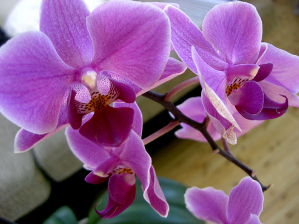orchids.jpg