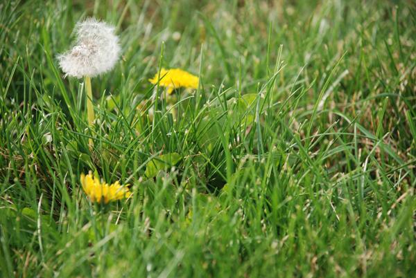 grass2.jpg