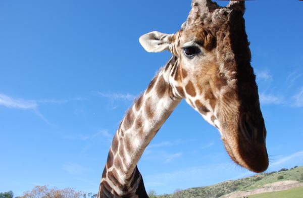 giraffedude.jpg