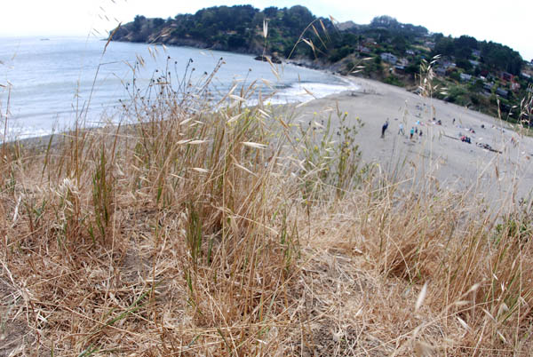 tjoblogbeachgrass.jpg