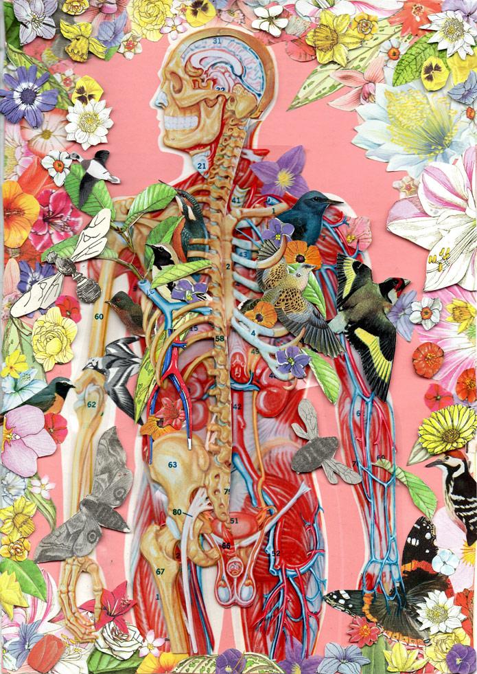Biologia sistemas do corpo humano