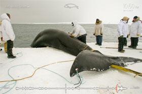 whale_hunt.jpg