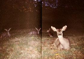 buck_shot.jpg