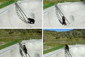 bear_gnar.jpg